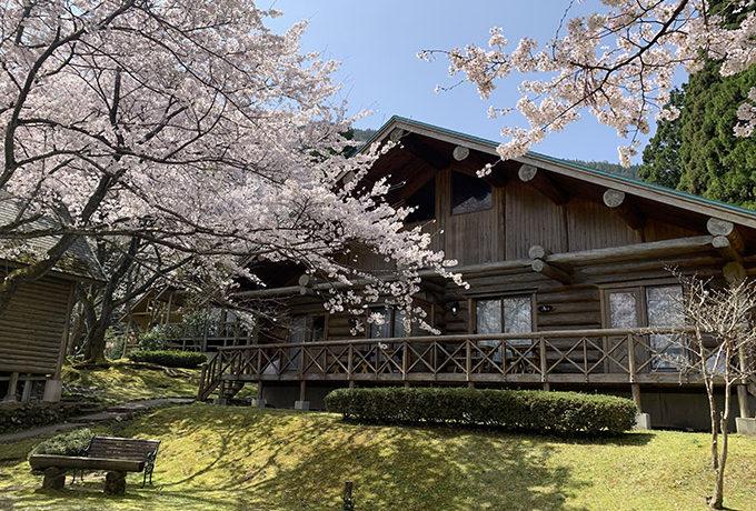 奥琵琶湖レイクシアの桜2021