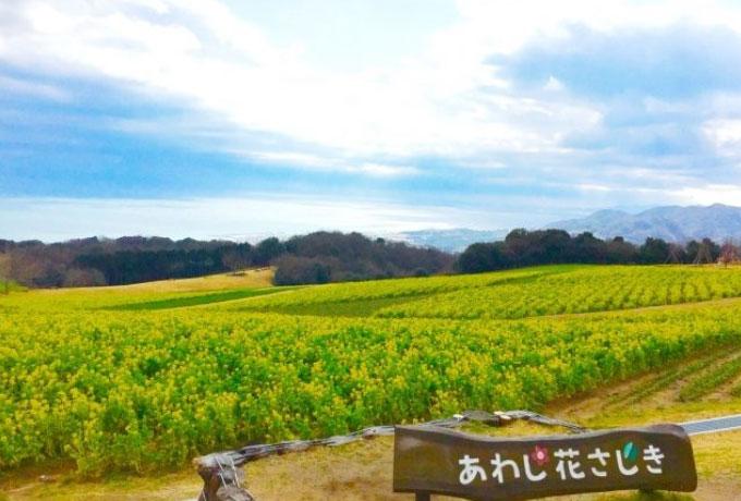 淡路島の観光スポット 花の名所「あわじ花さじき」