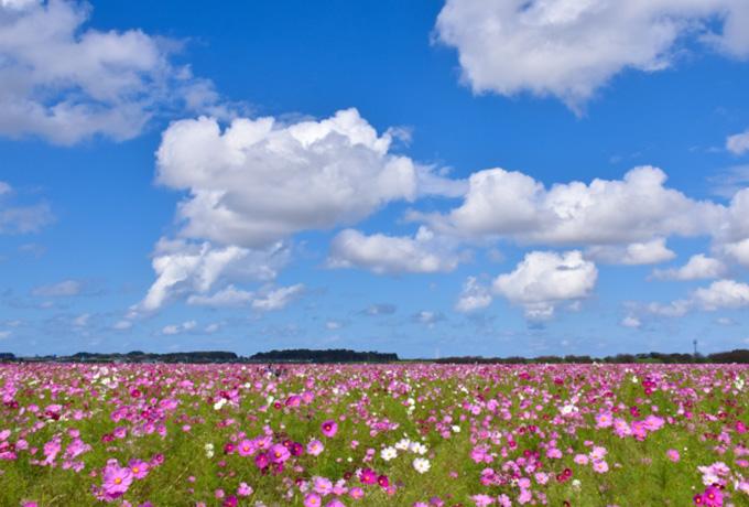 GFC越前パラデシアから立ち寄りやすい、周辺のお花の名所5選をご紹介!