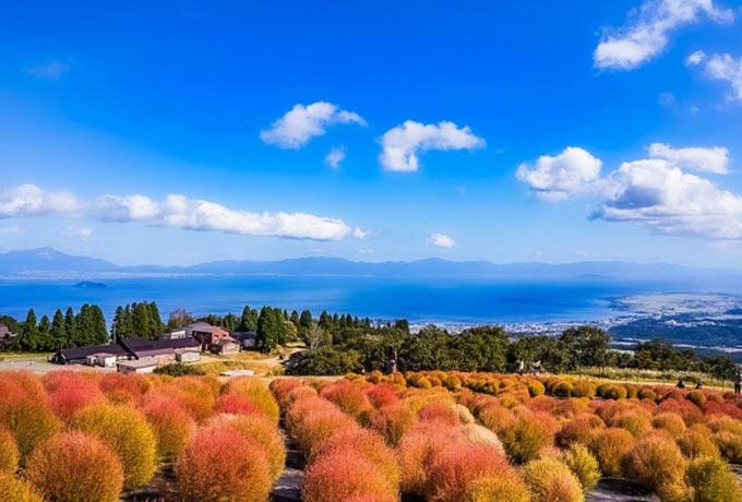 琵琶湖の観光スポット 花の名所「びわこ箱館山」